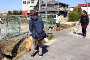 お散歩の練習