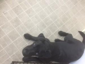 犬のホテル