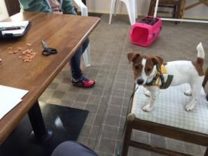 犬のしつけ教室