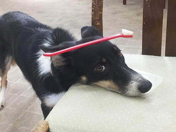 犬の学校・保育園(日帰り預かりトレーニング)